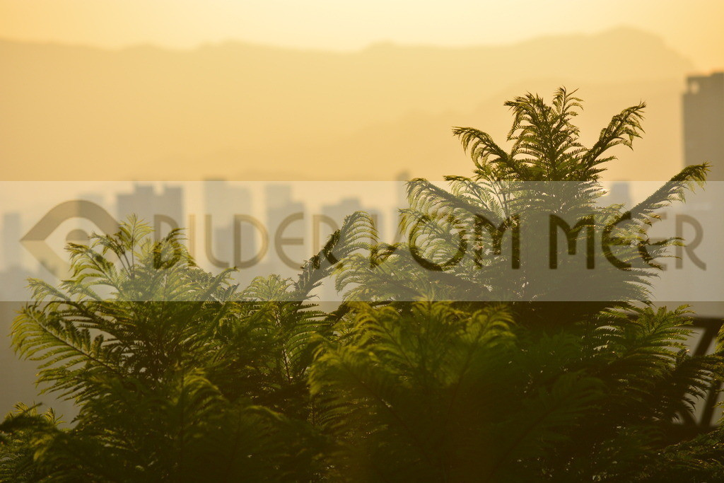 Foto Landschaft Benidorm | Foto Landschaft bei Sonnenuntergang