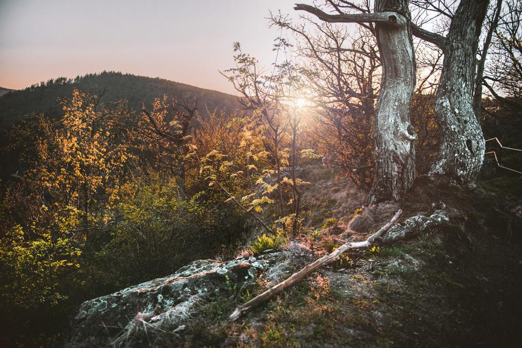 Wald- _ Bergluft - 1