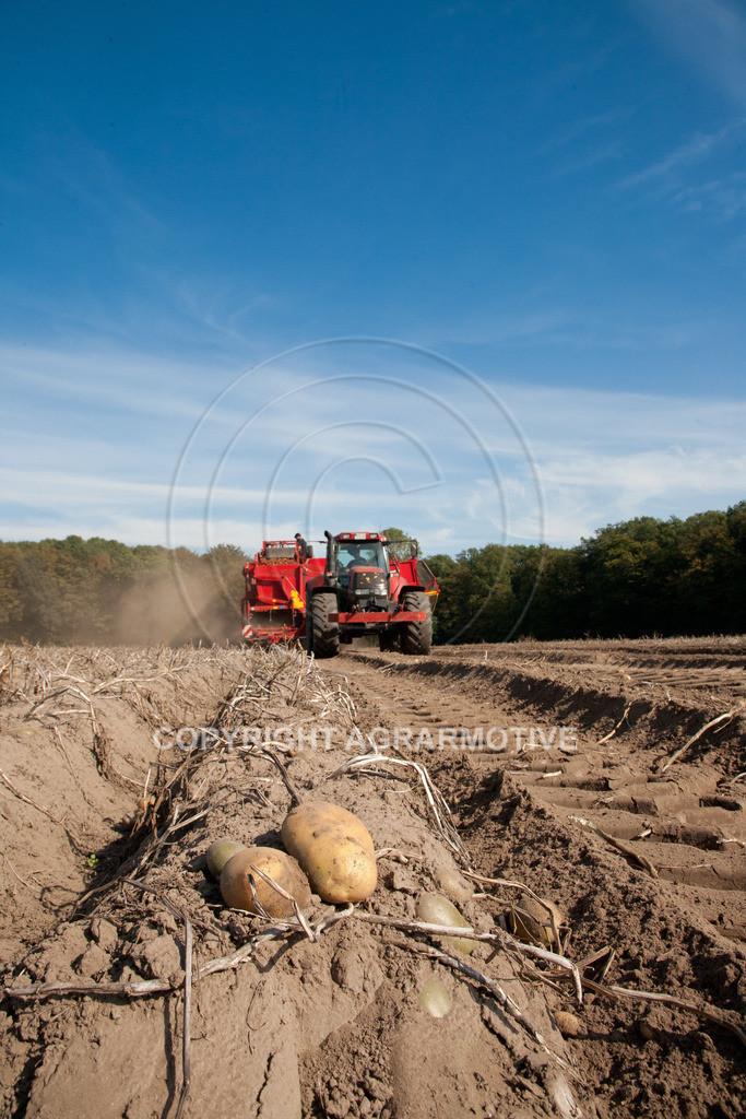 20110929-IMG_5847 | Ernte auf einem Kartoffelfeld - AGRARBILDER