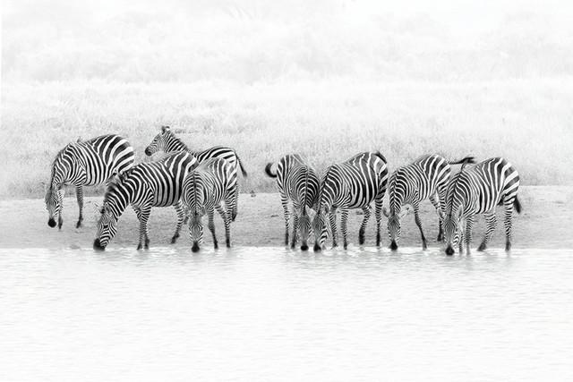 STRIPES - black and white   Kenya