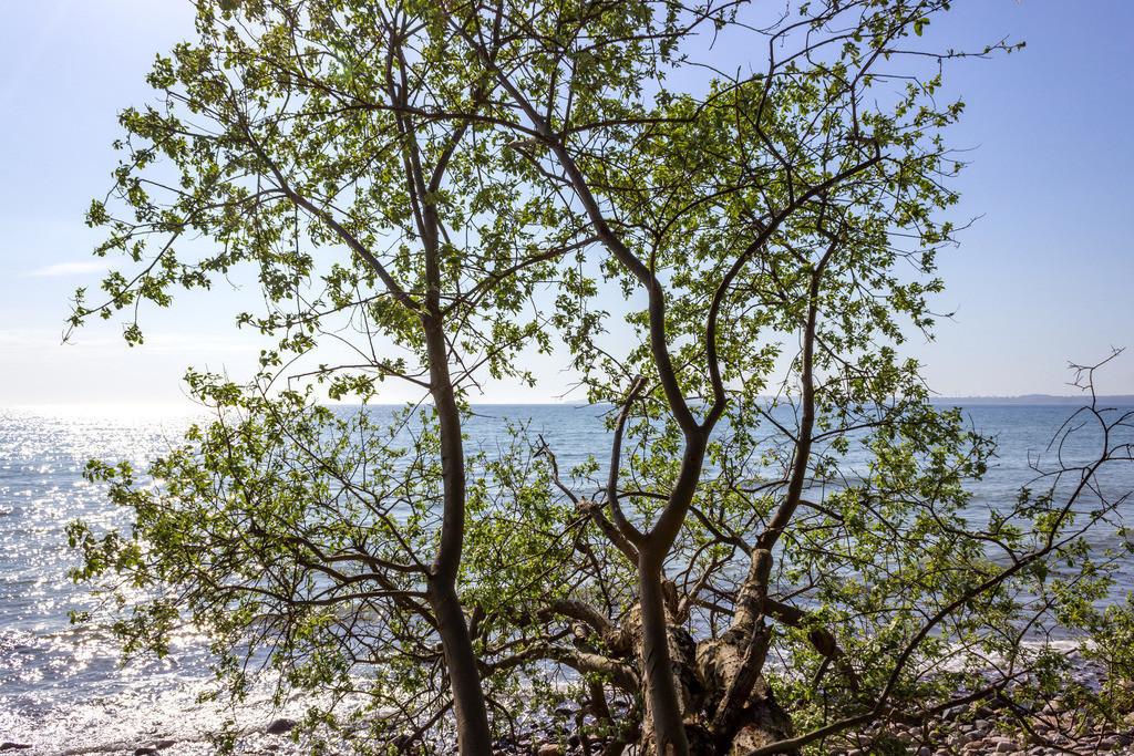 Steilküste in Kleinwaabs | Baum an der Steilküste in Kleinwaabs