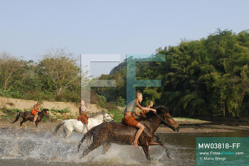 MW03818-FF | Thailand | Goldenes Dreieck | Reportage: Buddhas Ranch im Dschungel | Junge Mönche reiten auf ihren Pferden durch den Fluss.  ** Feindaten bitte anfragen bei Mario Weigt Photography, info@asia-stories.com **