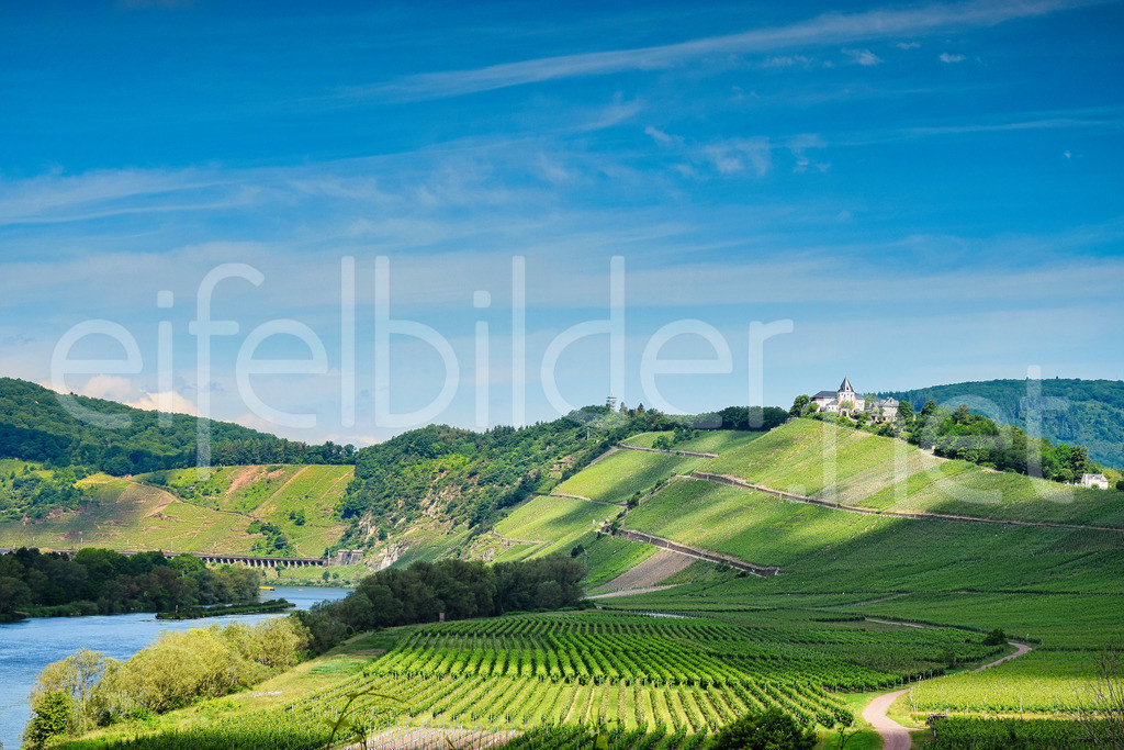 Mosel, Weinbau Landschaft Pünderich | Blick auf die Weinberge, die Mosel und die Marienburg (Pünderich), im Hintergrund zu sehen die Brücke der legendären Kanonanbahn