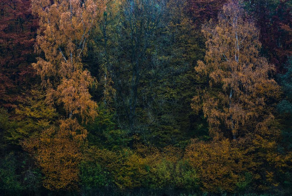 Waldrand im Herbst | Waldrand im Herbst in verschiedener Färbung