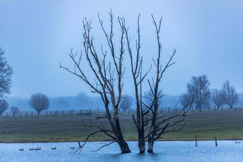 JT-181230-006 | Das Naturschutzgebiet Bislicher Insel, bei Xanten am Niederrhein,