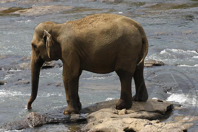 20090917-Sri Lanka-605