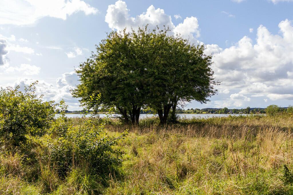 Bäume an der Schlei | Schlei im Sommer