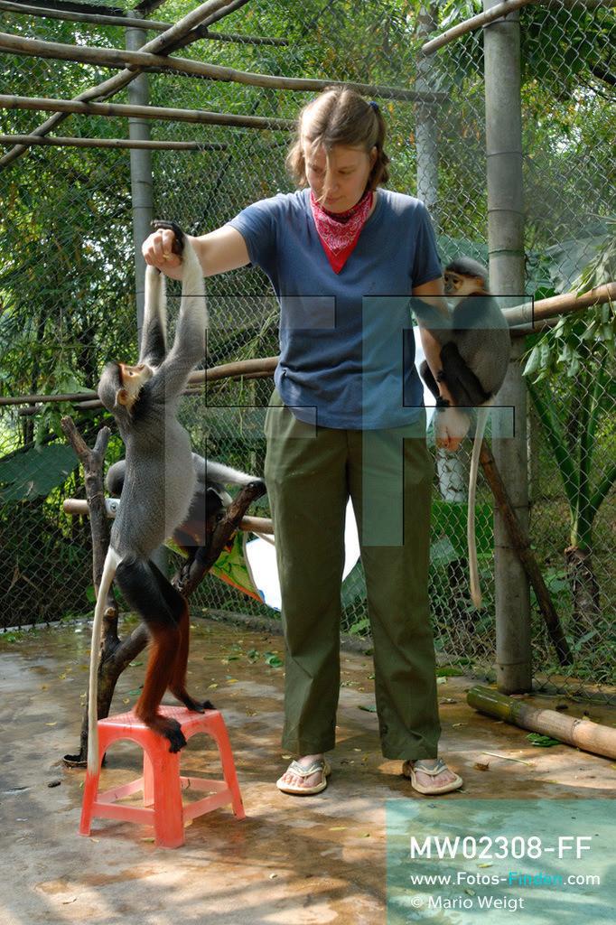 MW02308-FF | Vietnam | Provinz Ninh Binh | Reportage: Endangered Primate Rescue Center | Tierpflegerin spielt im Käfig mit Rotschenkligen Kleideraffen. Der Deutsche Tilo Nadler leitet das Rettungszentrum für gefährdete Primaten im Cuc-Phuong-Nationalpark.   ** Feindaten bitte anfragen bei Mario Weigt Photography, info@asia-stories.com **