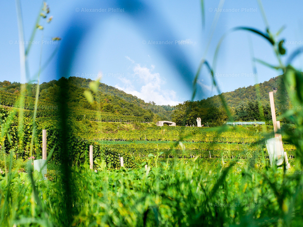 spitz_rotes_tor_(c)photography_pfeffel_at_01