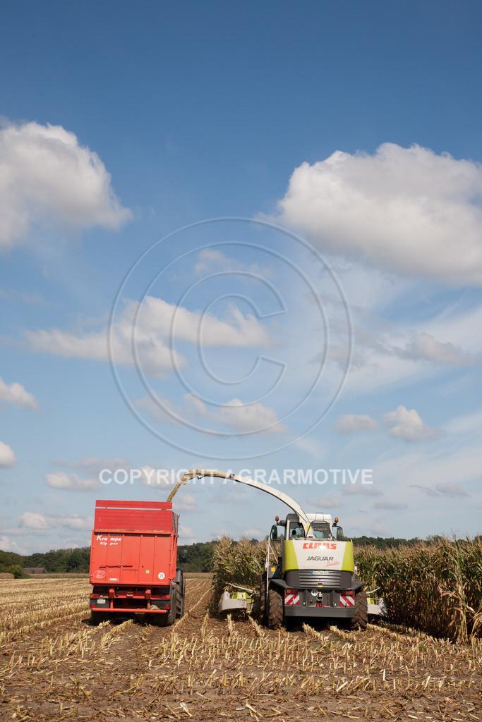 20080914-IMG_8991 | Silomais wird gehäckselt - AGRARFOTO Bilder aus der Landwirtschaft