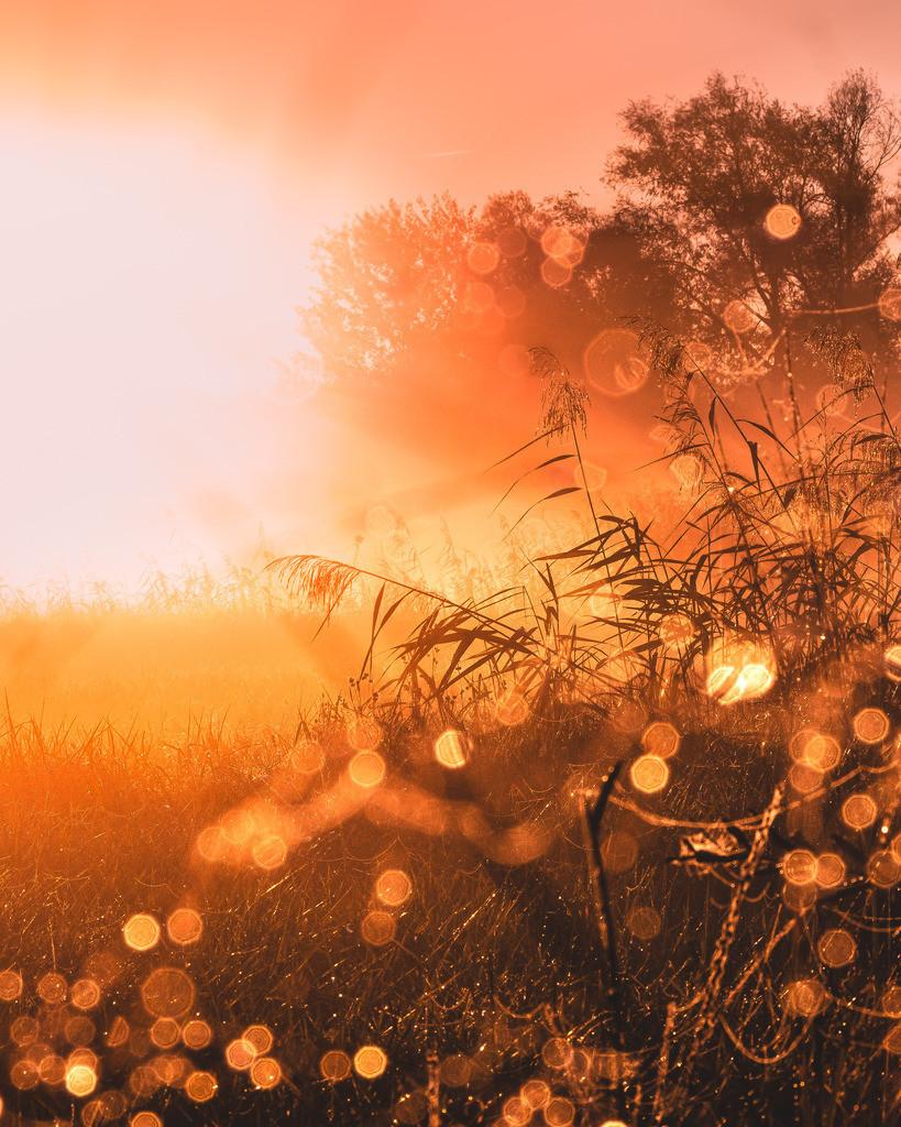 Herbstgold | Herbstmorgen im Ried