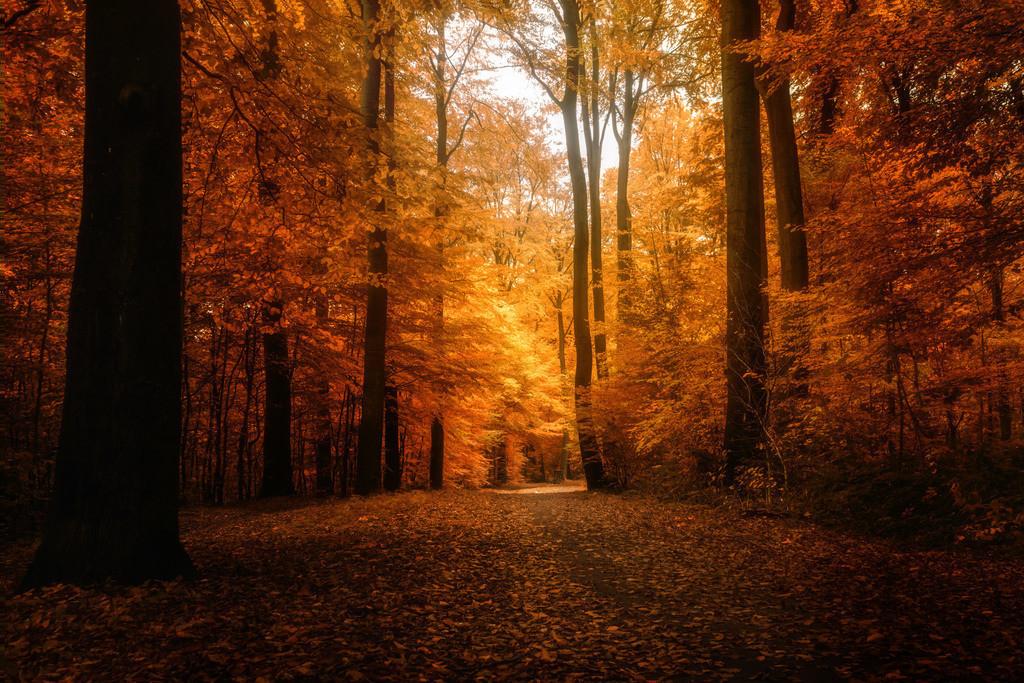 Goldener Oktober | Herbststimmung im Klosterholz.