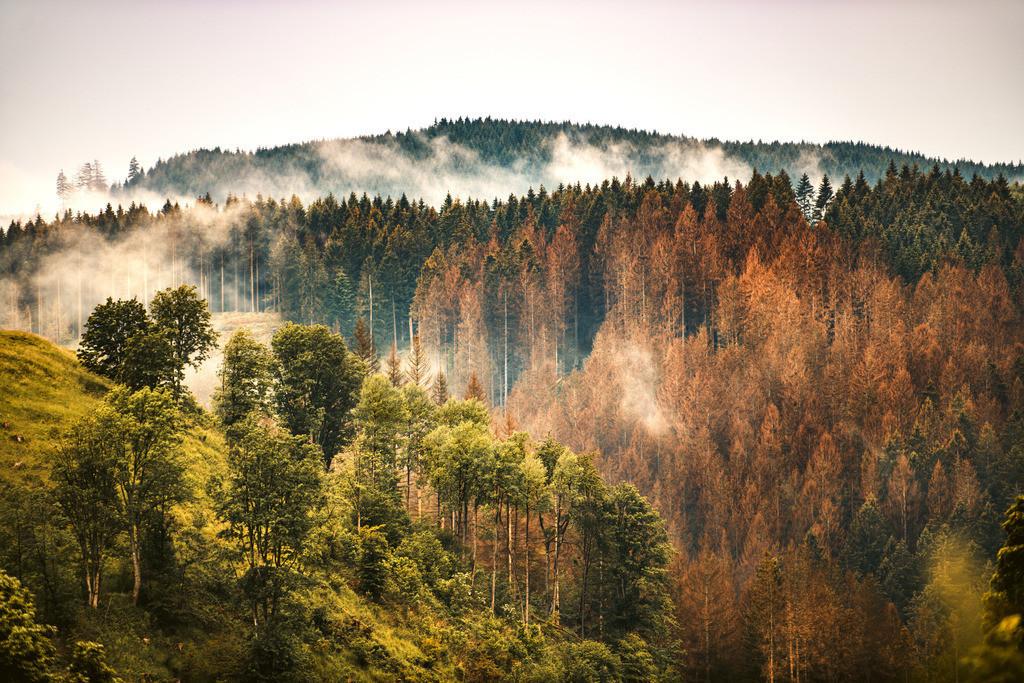 Harz_02