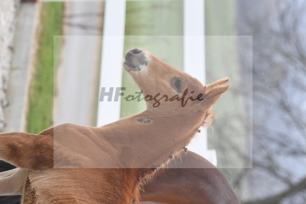 Kat-Nr. 4 HF Don Juan de Hus  6210137