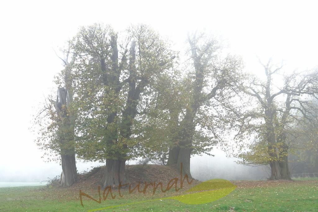 Kraftbaumhügel