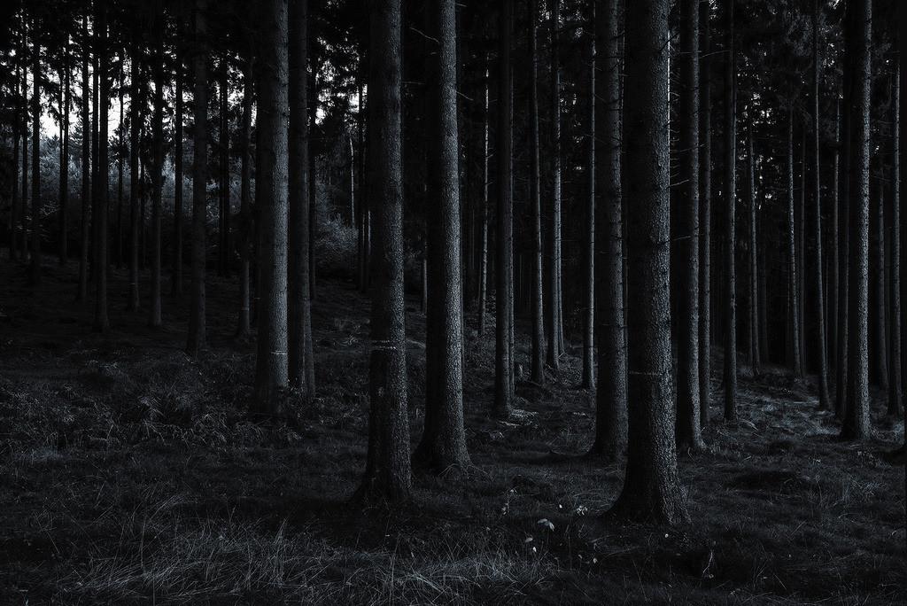 Tiefer Forst | dunkler Fichtenwald