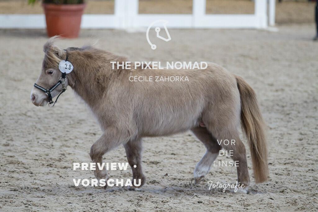 170204-28-AMH-LMSJoopClassic09 | LMS Joop Classic von Solarwind Armani Echo aus der Serenity Acres Chanel 43 Cocoa von Ridgehavens Cocoa / American Miniature Horse