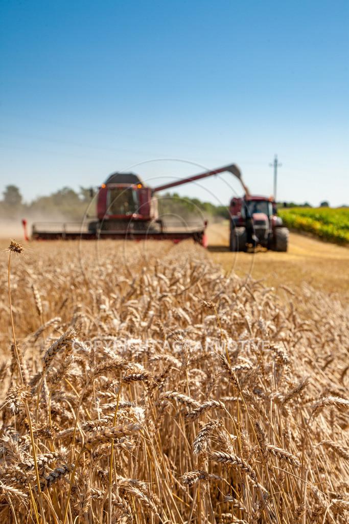 20110804_0335   Mähdrescher bei der Weizenernte