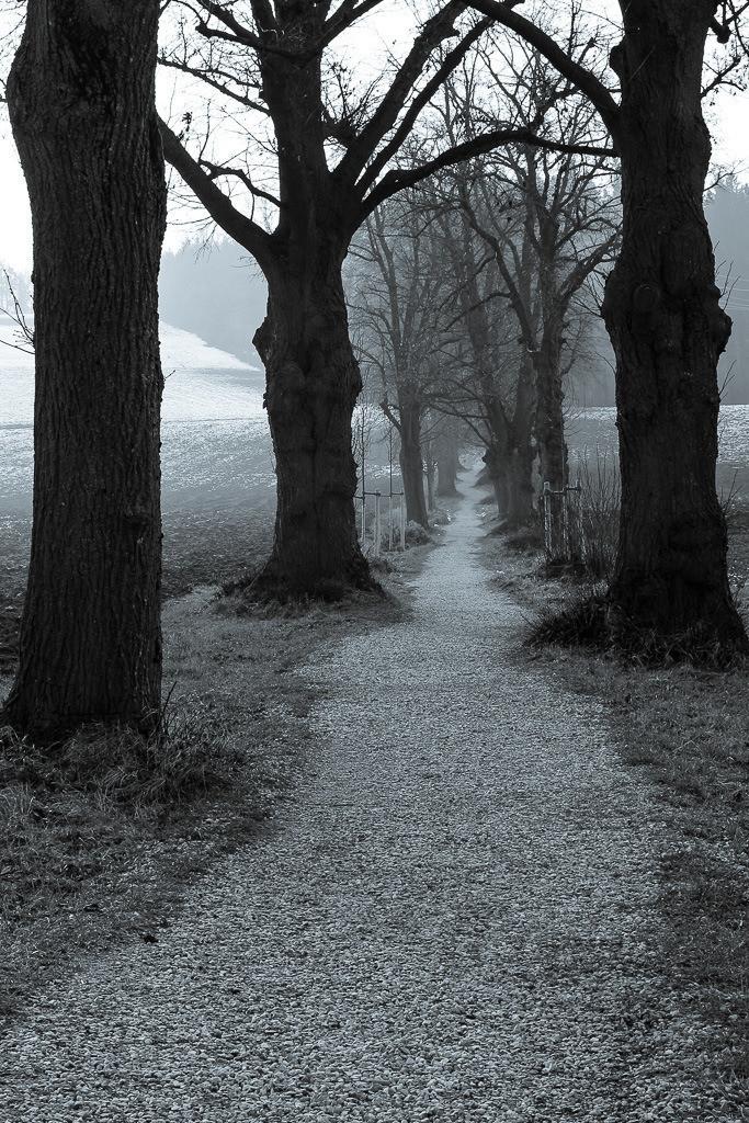Baumallee im Winter
