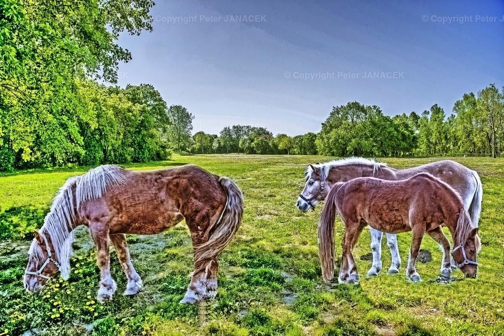 PferdeWieseSurreal
