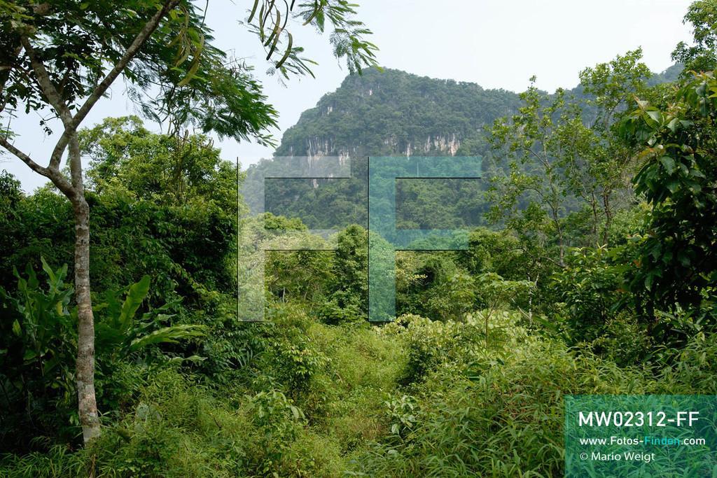 MW02312-FF | Vietnam | Provinz Ninh Binh | Reportage: Endangered Primate Rescue Center | Der Cuc-Phuong-Nationalpark umfasst über 200 Quadratkilometer tropischen Regenwald. Der Deutsche Tilo Nadler leitet das Rettungszentrum für gefährdete Primaten im Cuc-Phuong-Nationalpark.   ** Feindaten bitte anfragen bei Mario Weigt Photography, info@asia-stories.com **