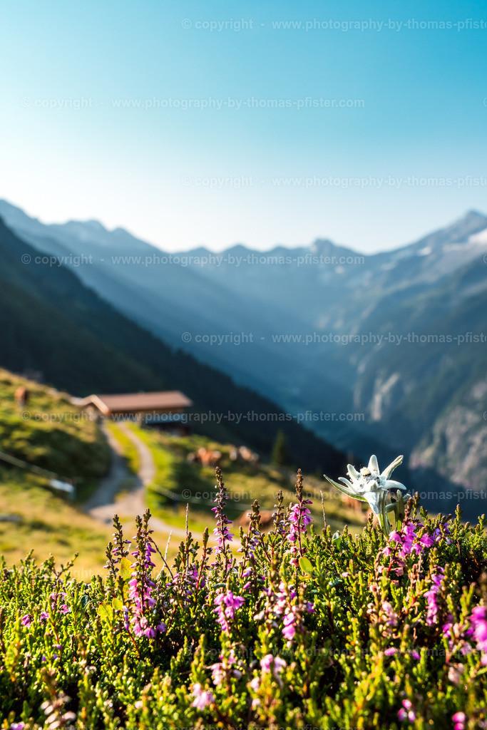 Edelweiss am Ahorn-3