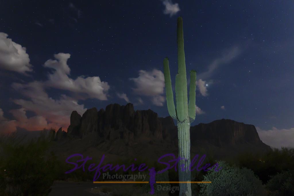 Saguaro unterm Sternenzelt