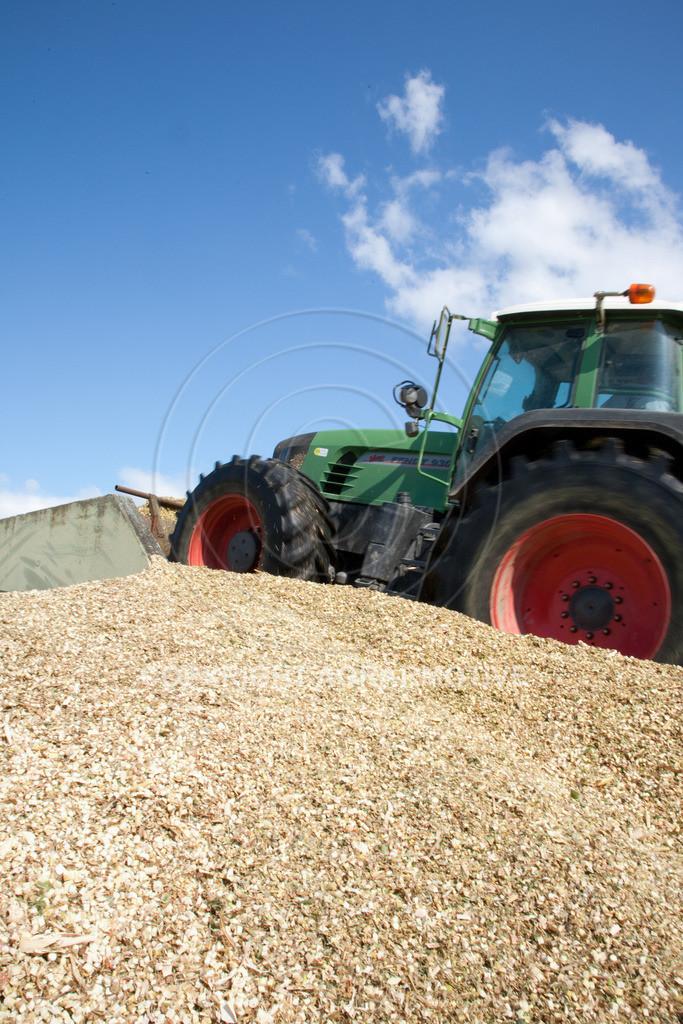 20080914-IMG_9108 | Silomais wird gehäckselt - AGRARFOTO Bilder aus der Landwirtschaft