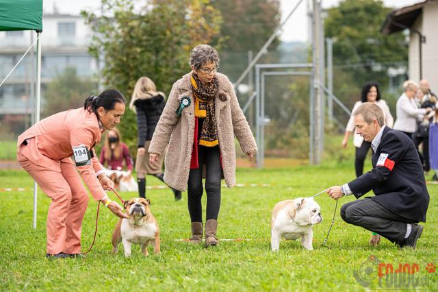 {event} | CACIB Fehraltorf Autumn Swiss Dog auf der Pferderennbahn in Fehraltorf  08.10.2021 Foto: Leo Wyden