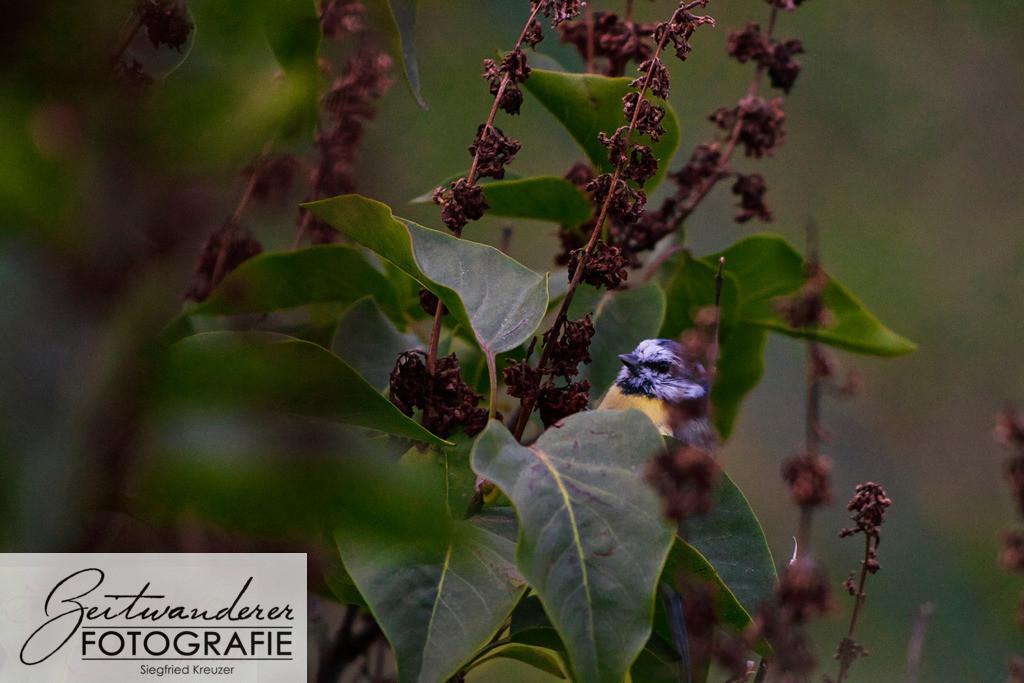 neugierieges Vögelchen