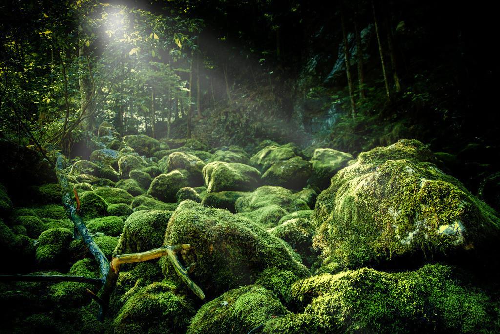 Waldlicht | Roßleithen