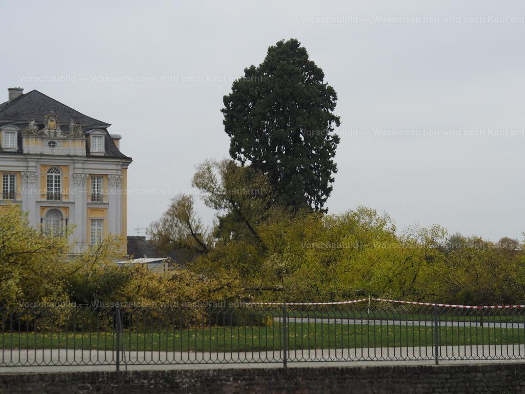 Last tree falling (9/10)