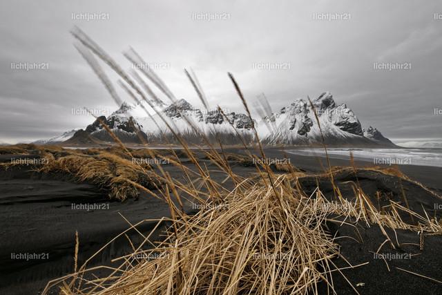 Bergkette vor schwarzen Sanddünen | Schneebedeckte Bergformation vor den Dünen eines schwarzen Lavasandstrandes, im Vordergrund eine große mit etwas Gras bewachsene Sanddüne, Grashalme werden vom Wind bewegt, große Tiefenwirkung - Location: Island, Südküste