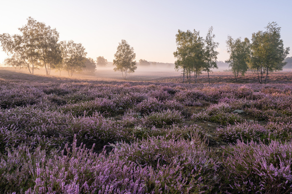 CZ7_5780 | Westruper Heide nach dem Sonnenaufgang