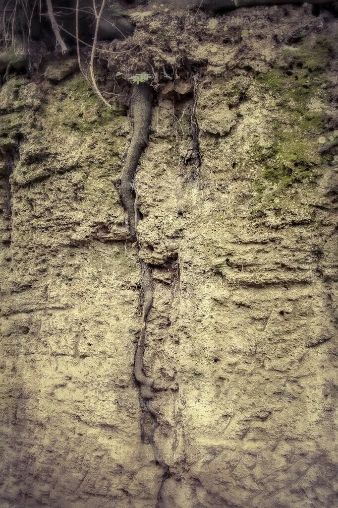 Wurzel im Stein
