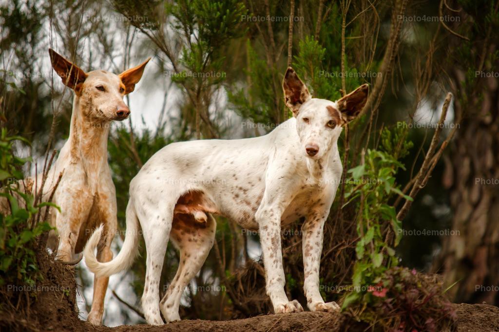 Strassenhunde-1-11