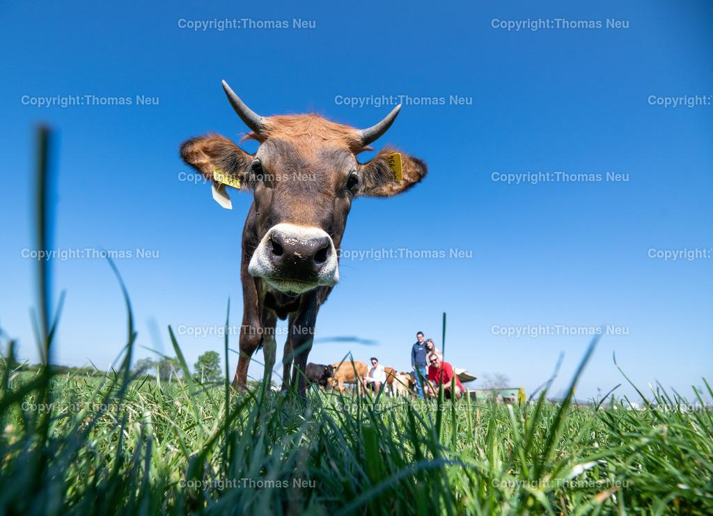 DSC_9977 | Bensheim, Schwanheim, FamilieSchweikert in Schwanheim nach 50 Jahren Viehhaltung jetzt mit ihren Rindern auf die Weiden, ,, Bild: Thomas Neu