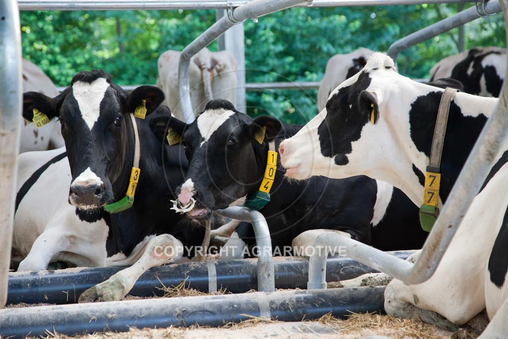 20110627-IMG_3076 | Milchkühe im Boxenlaufstall