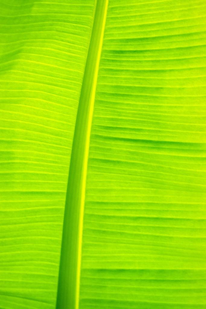 Holz 06 | Bananenblatt