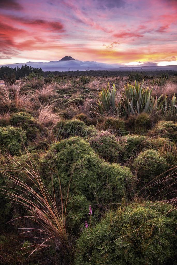 Sonnenaufgang im Tongario Nationalpark