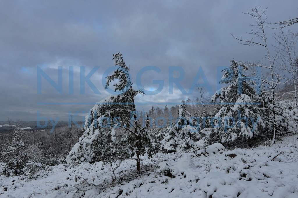 Winterwonderland in Iserlohn | Der verschneite Wald in Iserlohn.