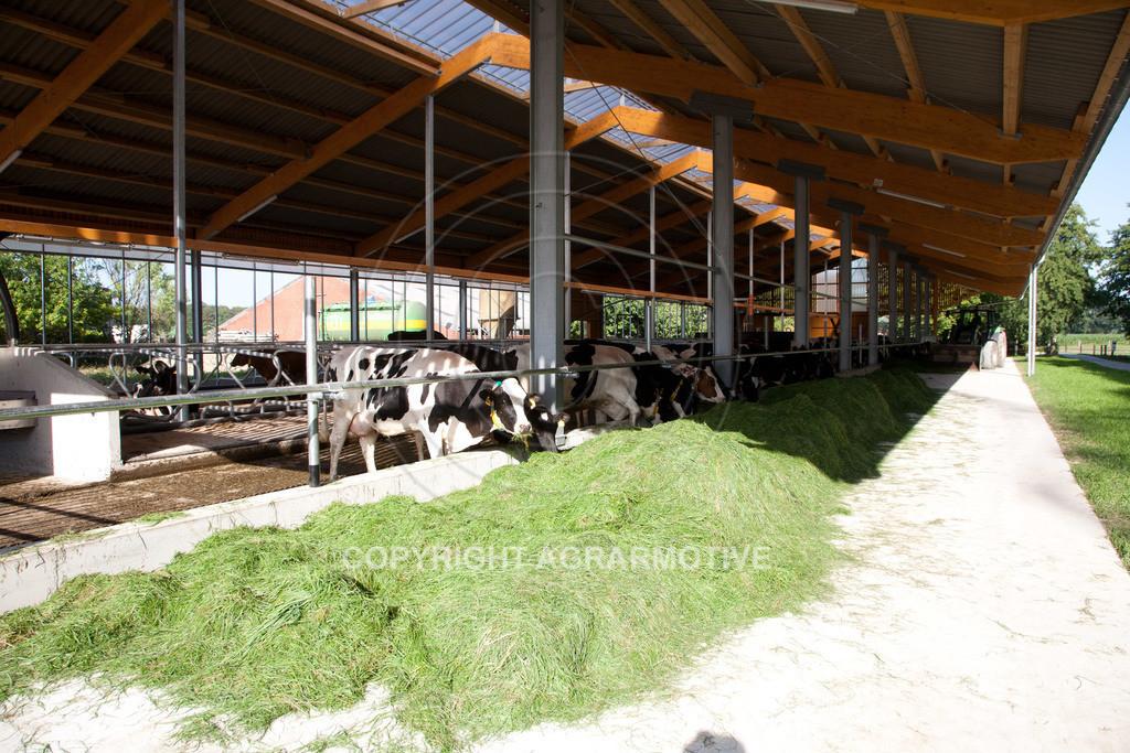 20110627-IMG_2971 | Milchkühe im Boxenlaufstall