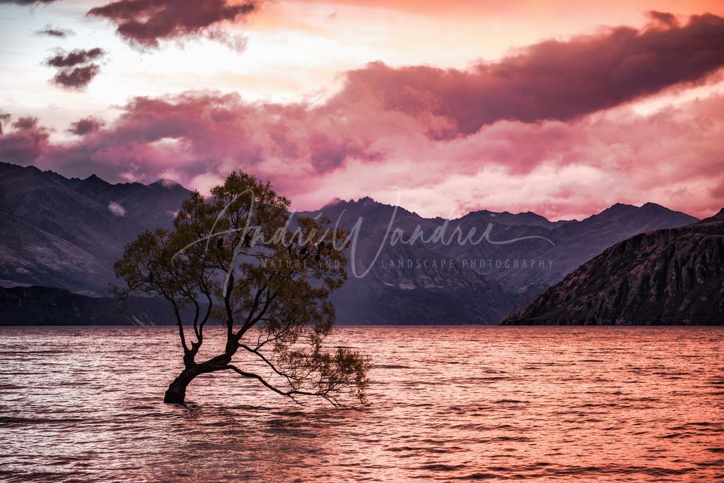 Der Baum im See