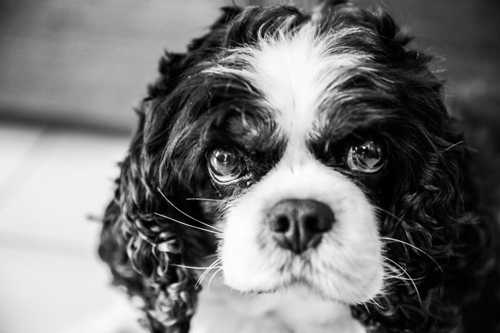 dogs--elmar.pics_8573