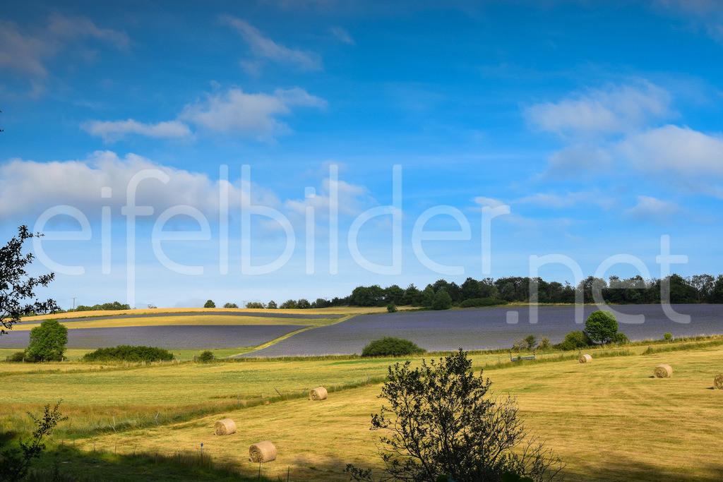 Landschaft in der Vulkaneifel   Wiesen und Felder, fotografiert bei Tettscheid in der Eifel/Vulkaneifel)