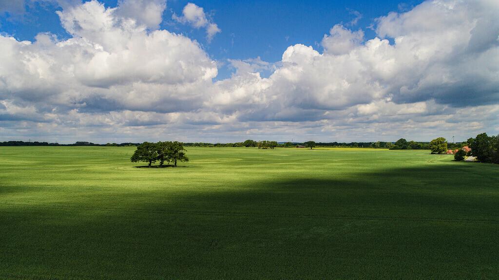 Windschatten | Solitär im Lichtkegel mit Wolkenhimmel, Weizenfeld Nähe Rohlfshagen, gegenüber Schachts Gasthof, Stormarn
