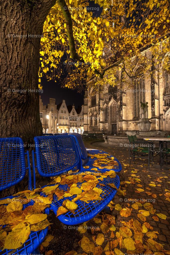 Herbstgold  | Münster im Herbst