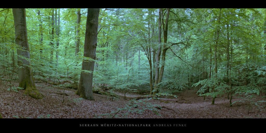 Poster Serrahn Müritz-Nationalpark | Poster oder Wandbild mit Buchen im Buchenwald und Weltnaturerbe Serrahn im Müritz Nationalpark kaufen