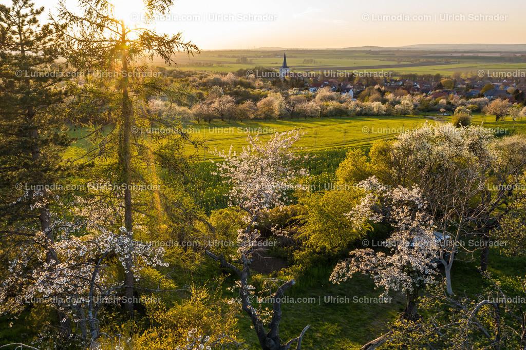 10049-51351 - Kirschblüte bei Eilenstedt