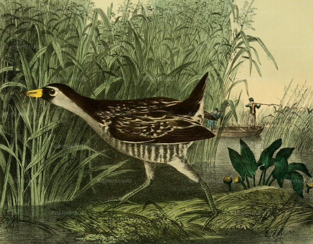 Doughty_ T. (1793-1856) - Cabinet of Natural History 1830 - Rail